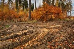 Un percorso fangoso nella foresta variopinta di autunno Fotografia Stock