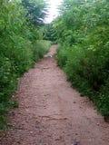 Un percorso fra gli alberi verdi Fotografie Stock