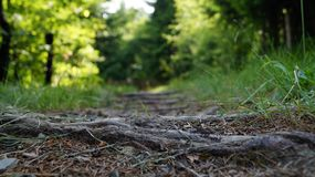 Un percorso ha allineato con i grandi alberi con il fogliame variopinto della molla Immagini Stock