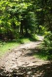 Un percorso in montagna Fotografia Stock