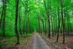 Un percorso nella foresta Immagini Stock Libere da Diritti