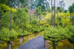 Un percorso scenico Fotografie Stock