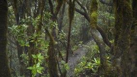 Un percorso in una foresta mistica magica stock footage