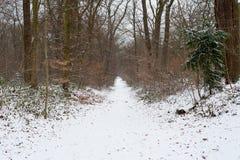 Un percorso in una foresta sotto la neve nell'inverno immagine stock