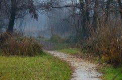 Un percorso vicino ad un lago Fotografie Stock Libere da Diritti