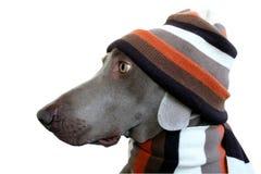 Un perfil del perro con el sombrero y la bufanda Fotos de archivo