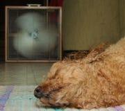 Un perrito caliente foto de archivo