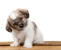 Un perrito confuso lindo Foto de archivo libre de regalías