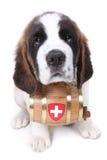 Un perrito de Bernard del santo con el barril del rescate Foto de archivo