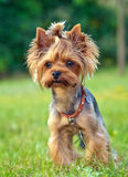 Un perrito encantador Imagen de archivo
