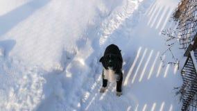 Un perrito golpea abajo otro feliz funcionamiento hasta la cerca Dos pequeños perritos negros alegres miran feliz en almacen de video