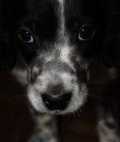 un perrito hermoso Fotos de archivo