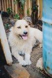 Un perrito justo lanudo está esperando su amo fotos de archivo