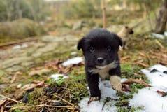 Un perrito lindo Imagen de archivo libre de regalías
