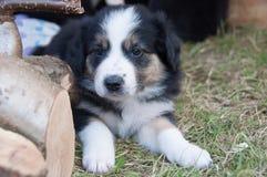 Un perrito lindo que pone en la hierba Imágenes de archivo libres de regalías