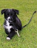 Un perrito loco Foto de archivo libre de regalías