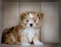 Un perrito marrón lindo con un fondo de madera del panel Foto de archivo