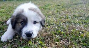 Un perrito mezclado que coloca en la hierba imagenes de archivo