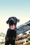 Un perrito negro fotografía de archivo libre de regalías