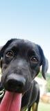 Un perrito negro fotografía de archivo