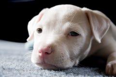 Un perrito nombrado Nina Foto de archivo