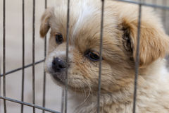 Un perrito para la venta que se preocupa de su futuro Fotos de archivo libres de regalías