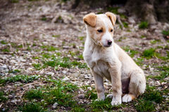 Un perro Imágenes de archivo libres de regalías