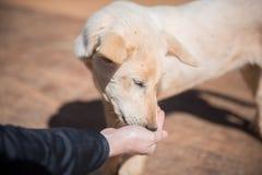Un perro Fotos de archivo