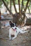Un perro Imagenes de archivo