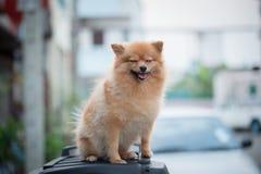 Un perro Fotografía de archivo libre de regalías