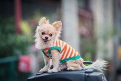 Un perro foto de archivo