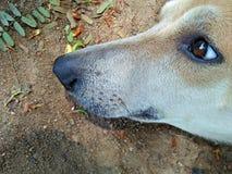 Un perro Imagen de archivo libre de regalías
