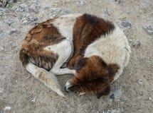 Un perro abandonado que duerme en el camino rural Fotografía de archivo