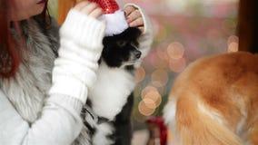 Un perro adorable lindo que lleva a Santa Hat For Being Santa Claus During Christmas Holidays Este perro parece tan feliz con ell almacen de metraje de vídeo