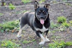 Un perro alegre en un paseo Foto de archivo