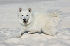 Un perro blanco en la arena blanca Imagen de archivo libre de regalías