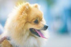 Un perro blanco lindo estar despierto siempre tomar el cuidado del secur foto de archivo