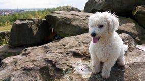 Un perro blanco mullido joven que se sienta en rocas Imagen de archivo