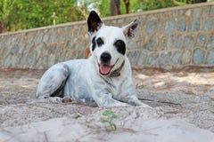 Un perro blanco que se sienta en la playa imagen de archivo libre de regalías