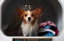 Un perro casero en una máquina más seca fotos de archivo