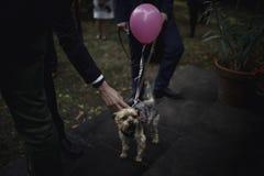 Un perro con un globo rosado Imagenes de archivo
