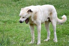 Un perro con sueño fotos de archivo