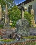 Un perro con un corazón quebrado de la lealtad en HDR Foto de archivo