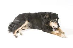 Un perro con un hueso fotos de archivo libres de regalías