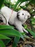 Un perro con una corona de la flor fotografía de archivo