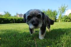 Un perro curioso Imagen de archivo libre de regalías
