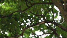 Un perro de aguas de Taiwán del pájaro en el árbol en el jardín de Taiwán Daan Forest Park Taipei almacen de metraje de vídeo