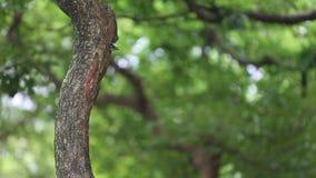 Un perro de aguas de Taiwán del pájaro en la jerarquía del agujero en el árbol en Taiwán Daan Forest Park almacen de metraje de vídeo
