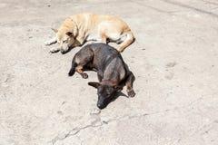 Un perro de la calle Foto de archivo