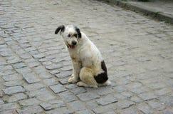 Un perro de la calle con una mirada de fascinación imagen de archivo